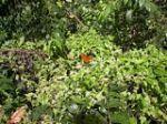 Photo 5: St Kitts Rain Forest