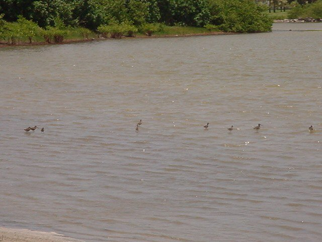 Birds in the salt pond at South Frigate Bay