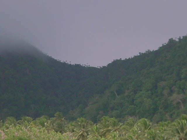 St Kitts rain forest in the Wingfield Area