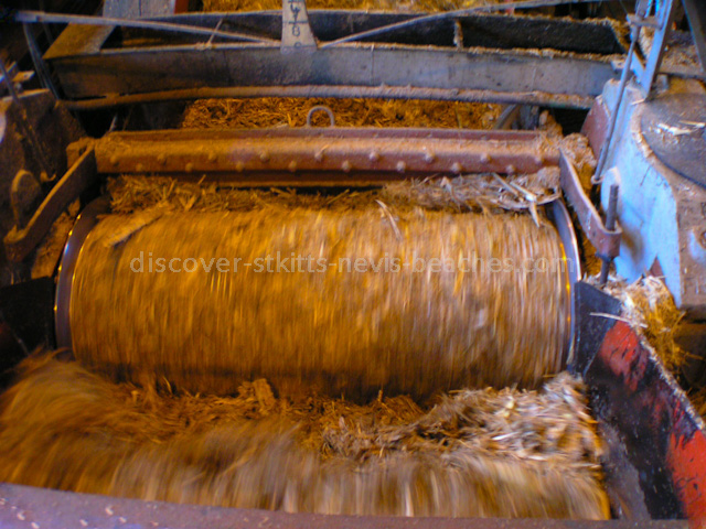 Crushed Sugae Cane