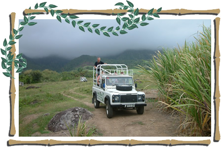 St Kitts Sugar Plantation Tour photo of land rovers in the cane fields