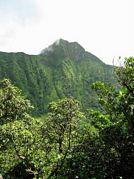 St Kitts tours with David Swanston of Poinciana Tours. St Kitts photo of Mount Liamuiga taken on a St Kitts volcano hike with Poinciana Tours.