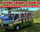 Poinciana Tours St Kitts Safari Tours