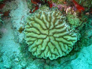 St Kitts scuba diving photo coral formation