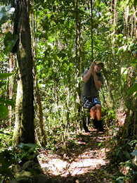 St Kitts tours and Island Safaris with Captain Sunshine Tours. St Kitts rainforest photo of Captain Sunshine Tours St Kitts Sunshine 360 Tour