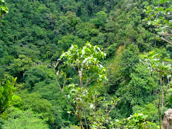 Photo of the Valley of the Giants in the Wingfield Rainforest