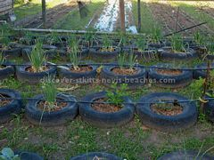Backyard gardening demo using used car tyres